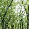 商売繁盛の秘訣はカリンの木と樫の木