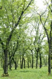 商売繁盛の木