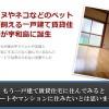 愛媛県宇和島市の不動産屋さんに助けられました