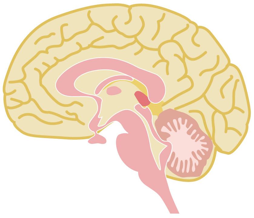 脳の潜在能力を引き出す方法