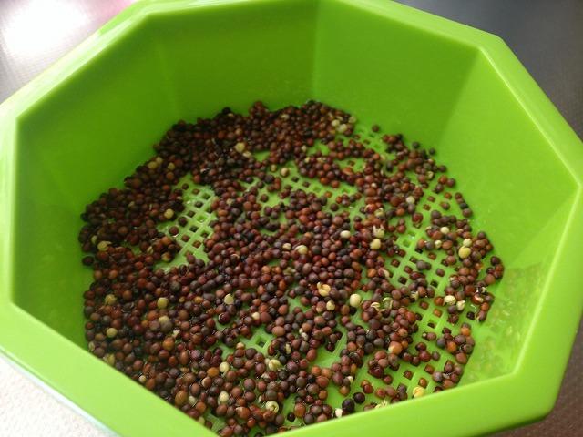 スプラウト栽培専用容器で簡単に発芽野菜を食べる